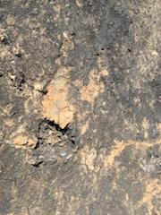 Burnt Clay, Grassland Fire